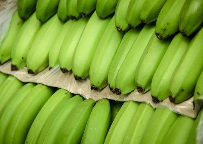 VALLE DEL CHIRA (Banano orgánico)