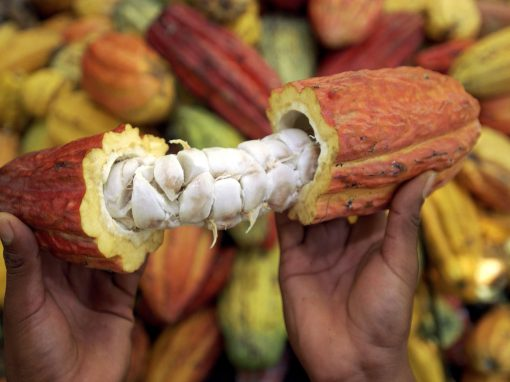 COOPERATIVA AGROINDUSTRIAL (Cacao)