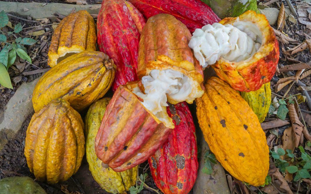 WARMI TSINANI (Cacao)
