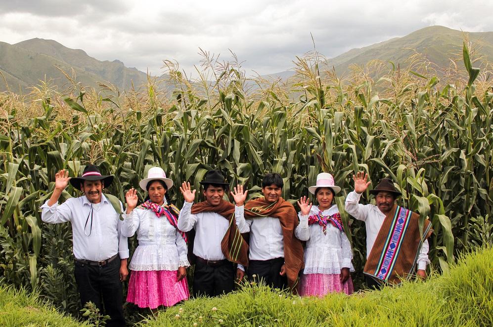 Productores maiceros de Cusco duplicaron su producción a 600 toneladas anuales