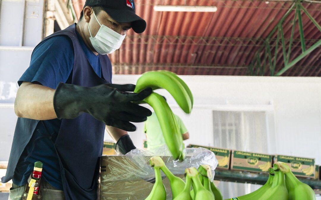 MINAGRI potenció capacidades de más de 11 mil productores de frutas y verduras a través de Planes de Negocio