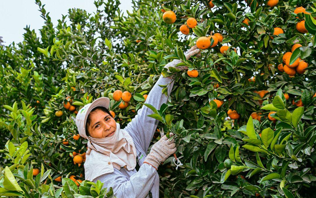 Minagri: S/35 millones para el cofinanciamiento de Proyectos de Reconversión Productiva Agropecuaria