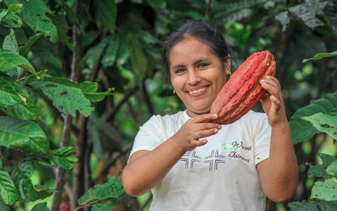 MINAGRI: Más de 8 mil productores de cacao accedieron a Planes de Negocio y Proyectos de Reconversión Productiva